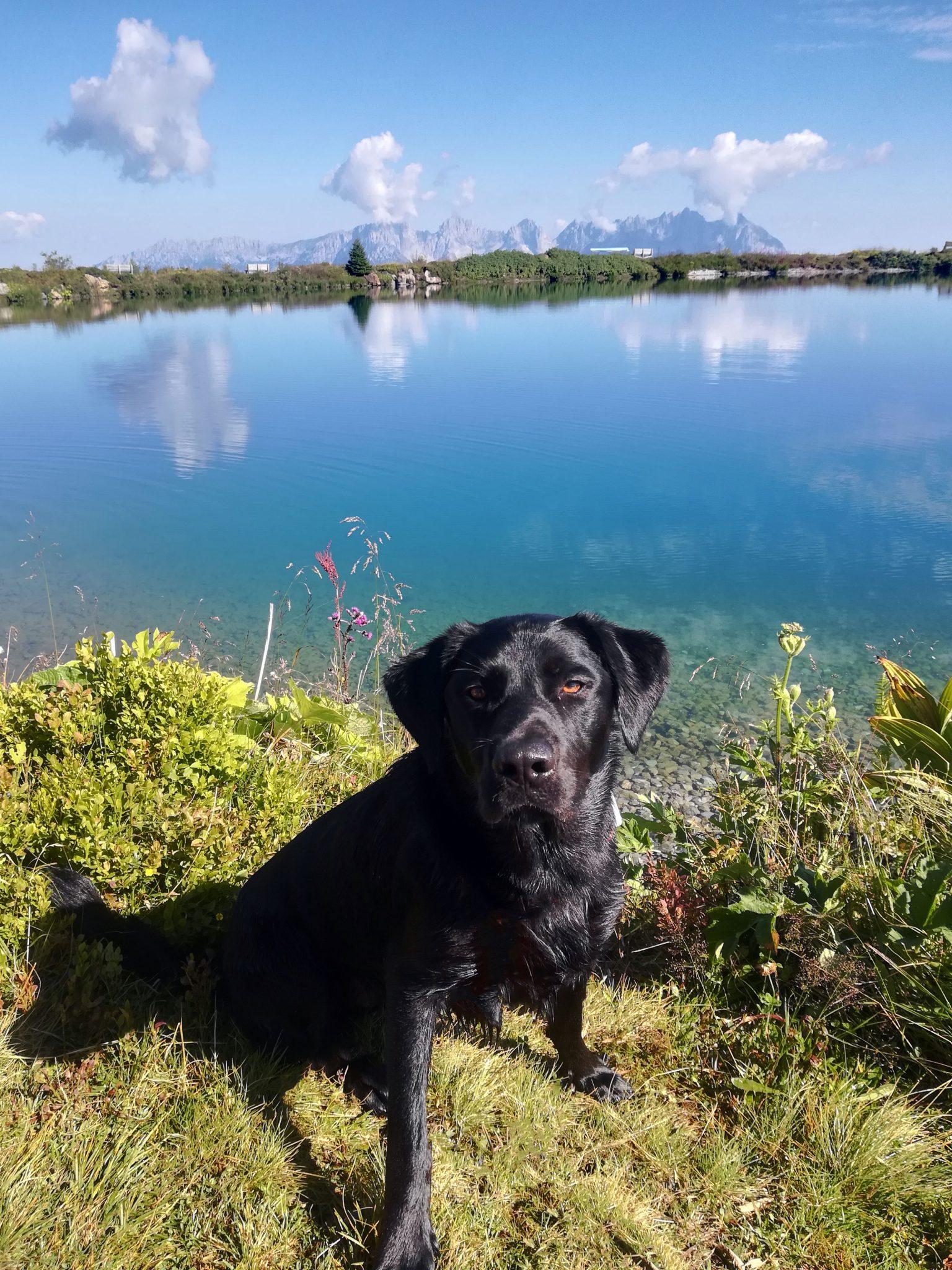 4-Seen-Wanderung Hund