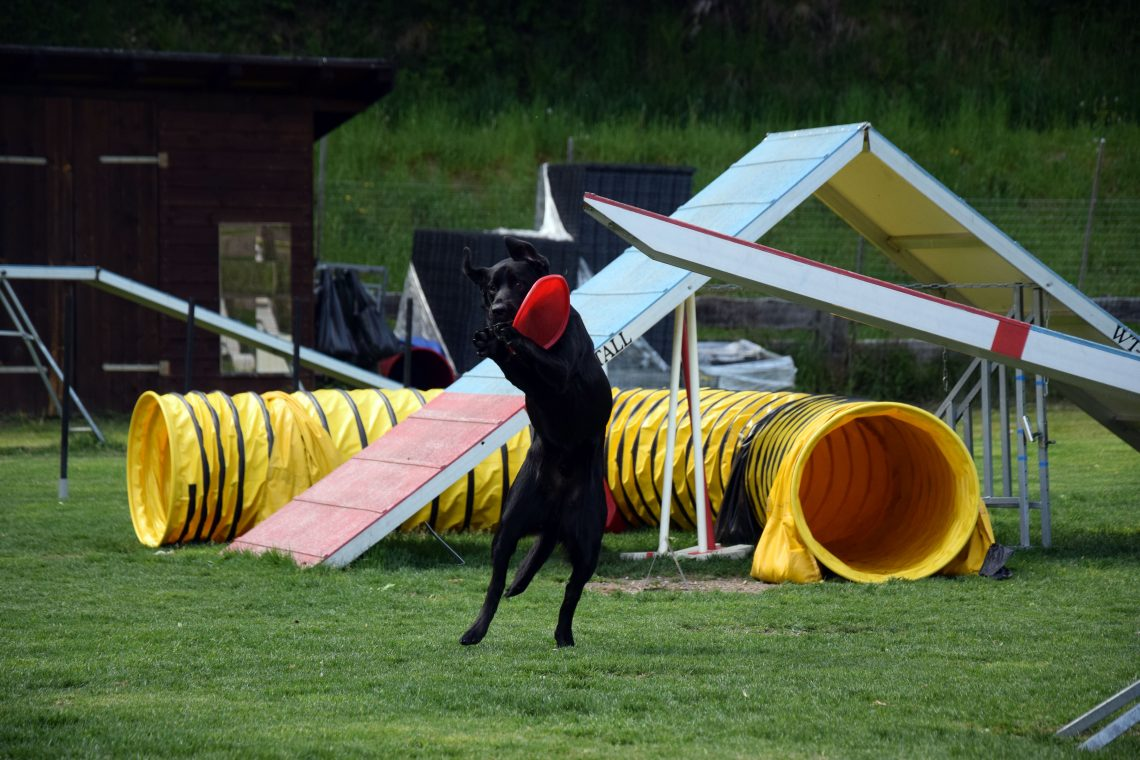 Agility Hundehotel Grimming