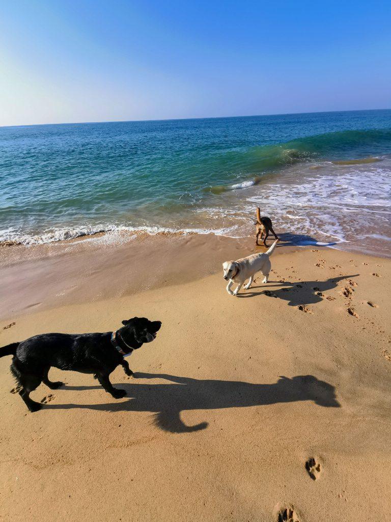 Algarve mit Hund