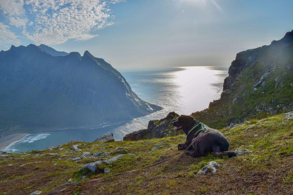 Aussicht Lofoten mit Hund