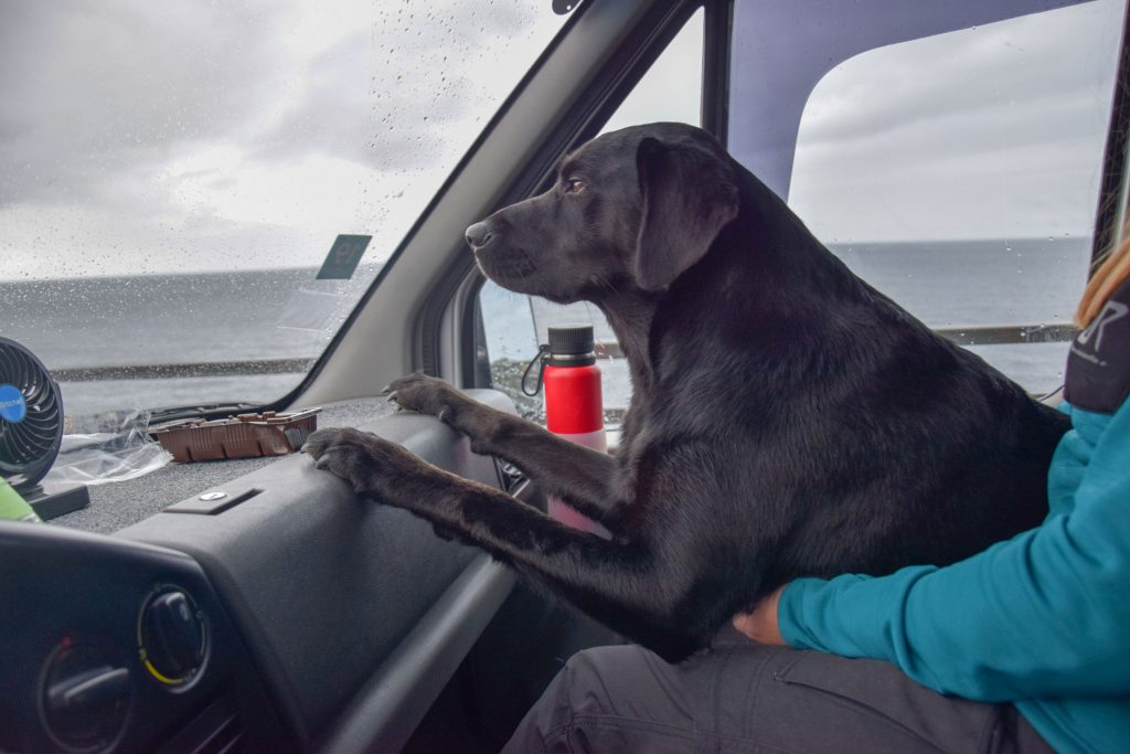 Autofahren mit Hund auf den Lofoten
