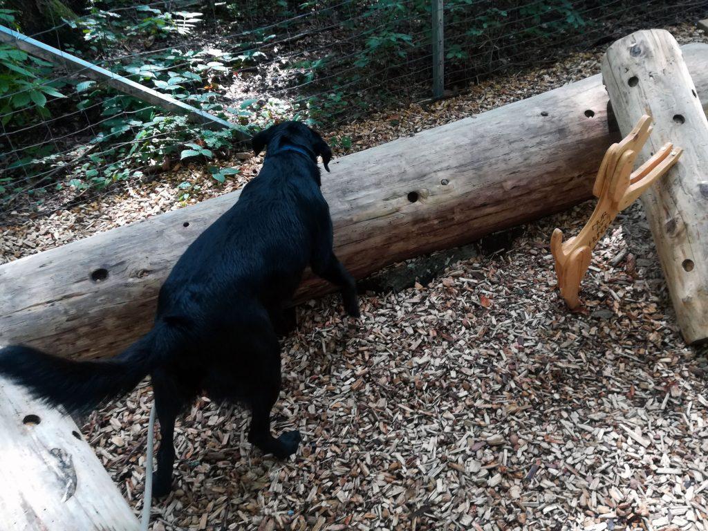 Bärenwald Arbesbach Baumstamm für Hunde