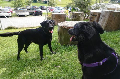 Bärenwald Arbesbach Hunde