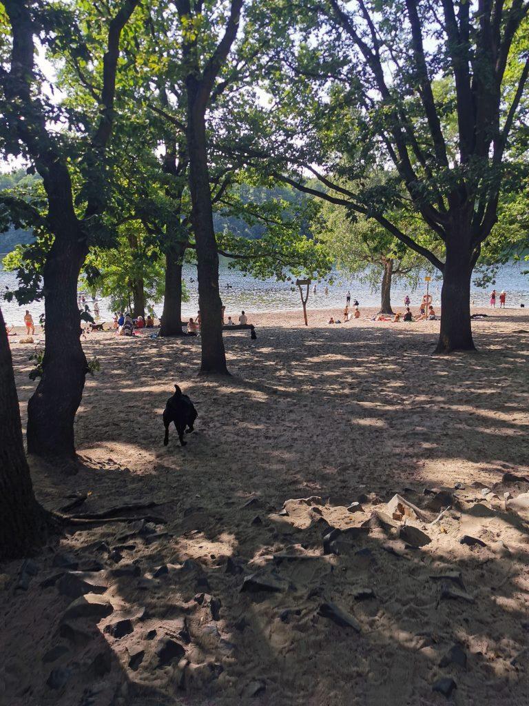 Baden mit Hund am Grunewaldsee