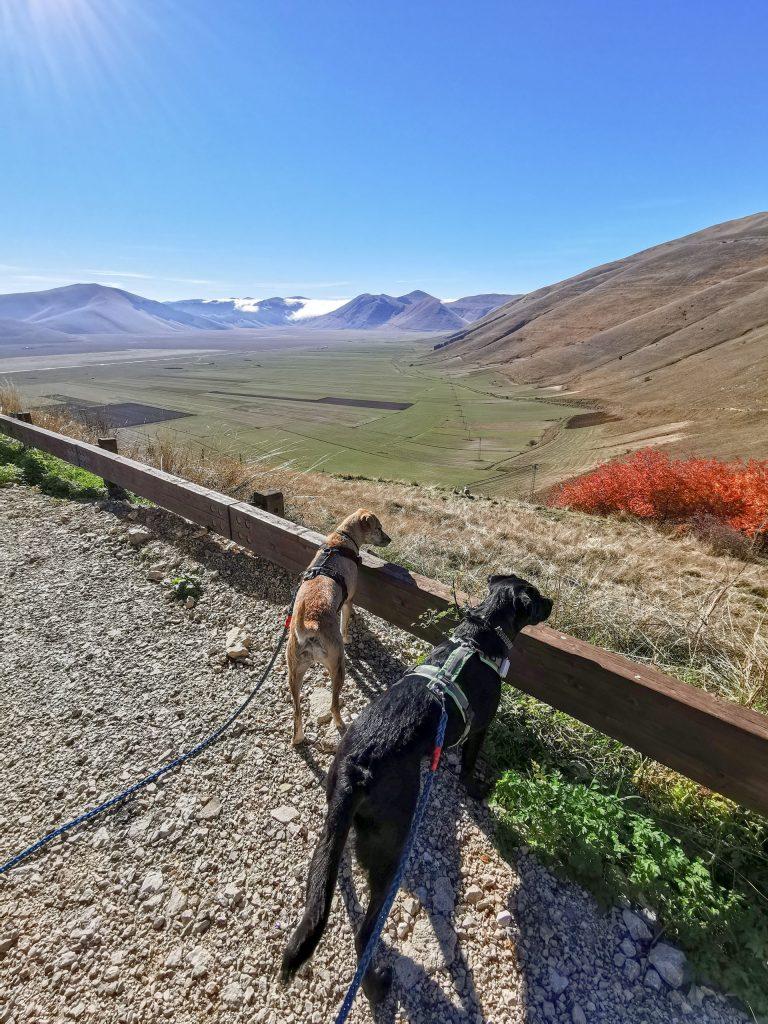 Bergdorf mit Hunden in Italien