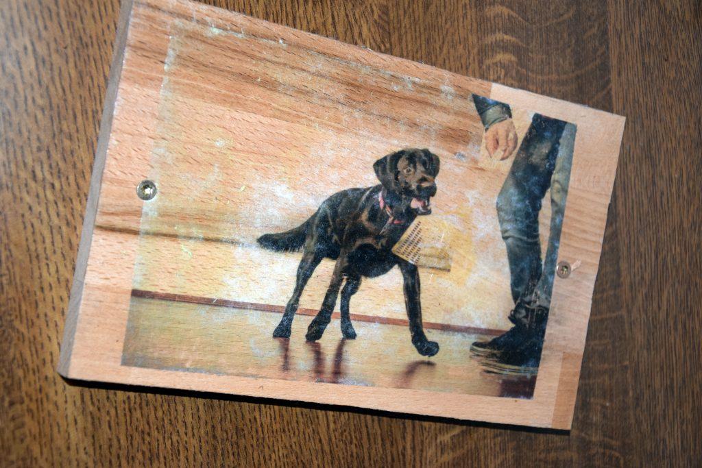 Bild Hund auf Holz