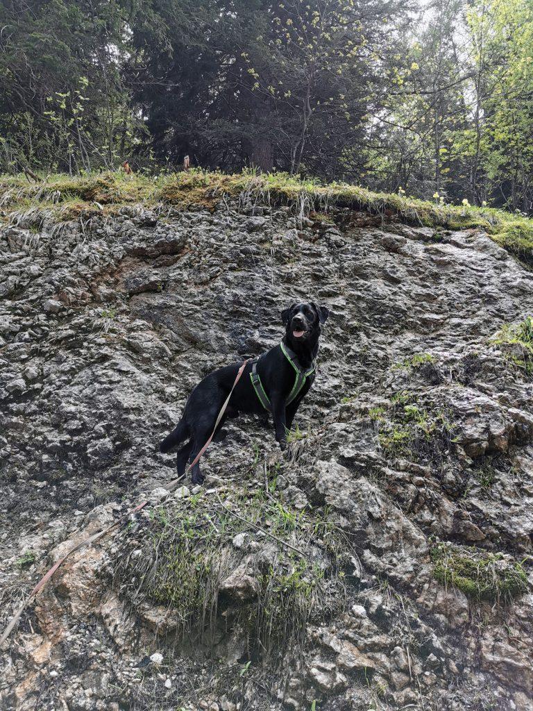 Bleckwand Wanderung mit Hund