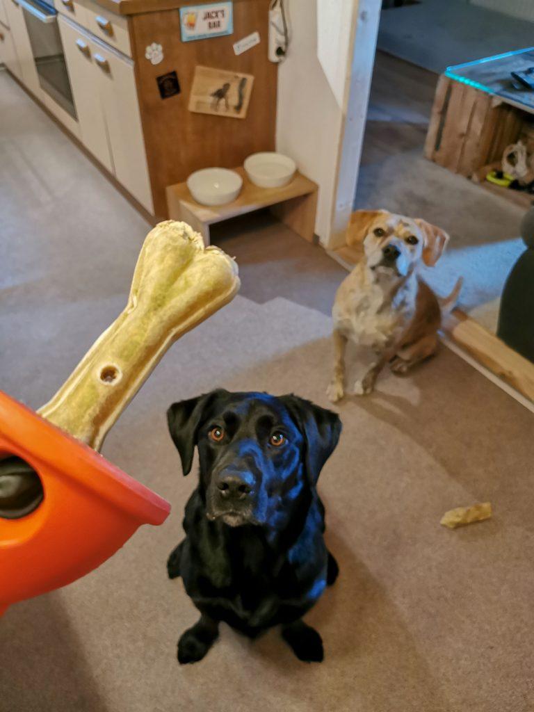 Boneguard Knochen für Hunde