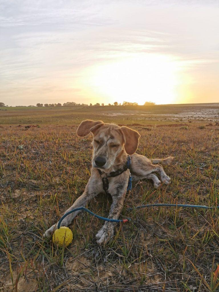 Camping Algarve mit Hund