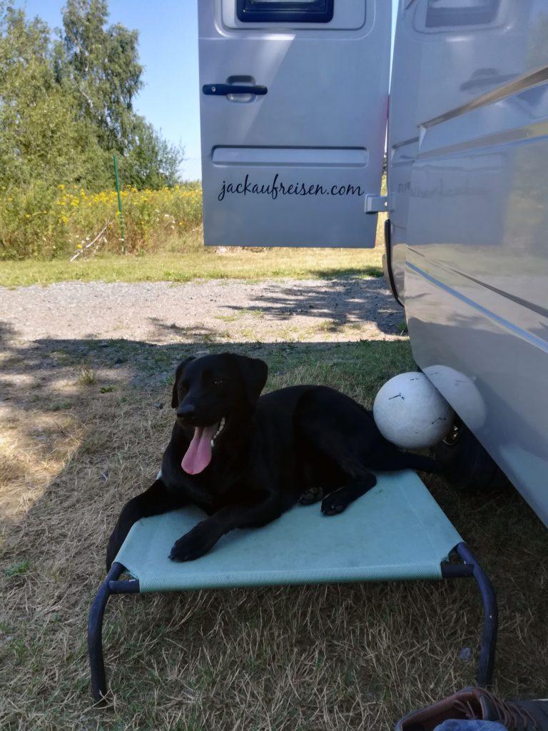 Camping-Liege für Hunde