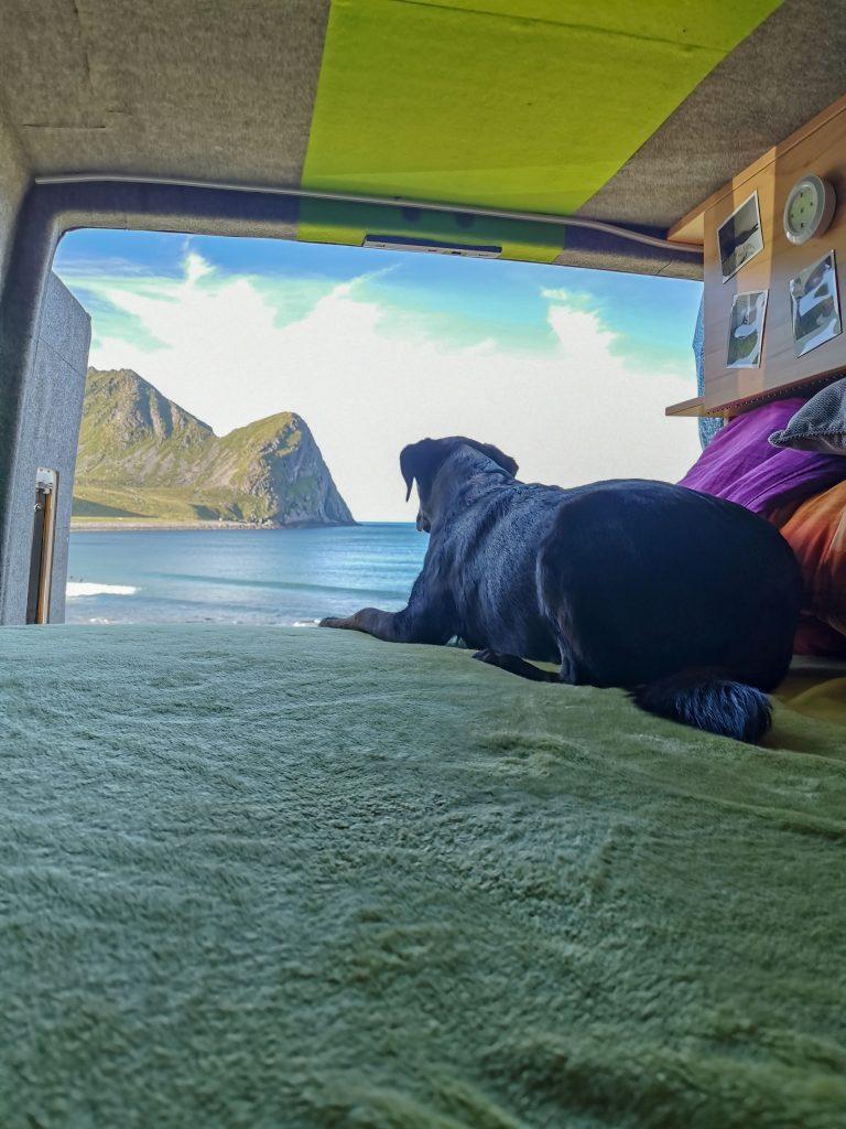 Camping auf den Lofoten mit Hund
