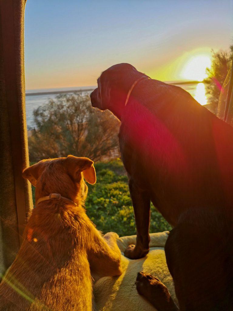 Camping mit Hund Costa de la Luz