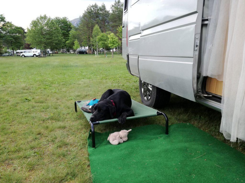 Camping mit Hund in Kärnten