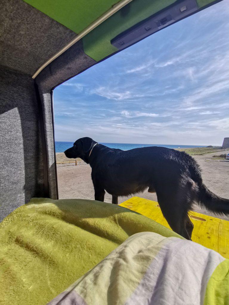 Camping mit Hund in Spanien