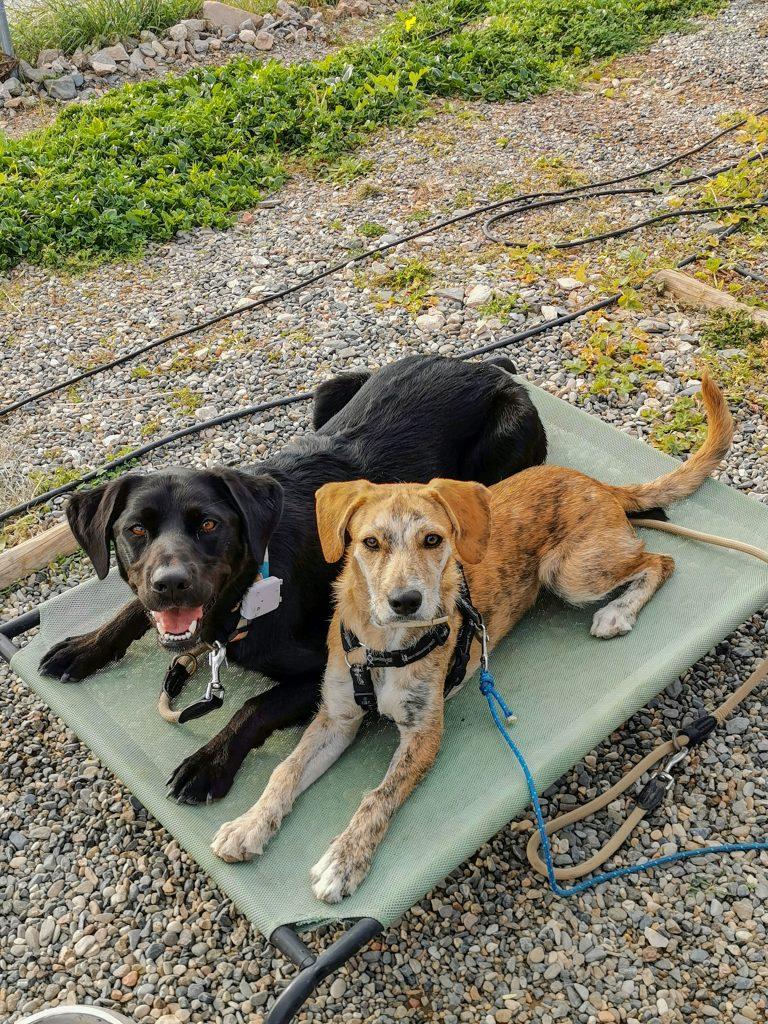 Campingplatz in Malaga mit Hund