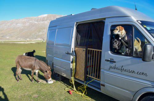 Campingtour durch Italien mit Hund