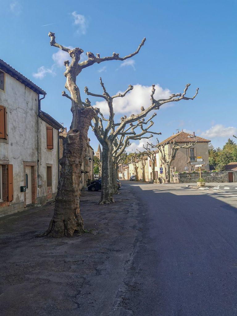 Castelnaudary mit Hund