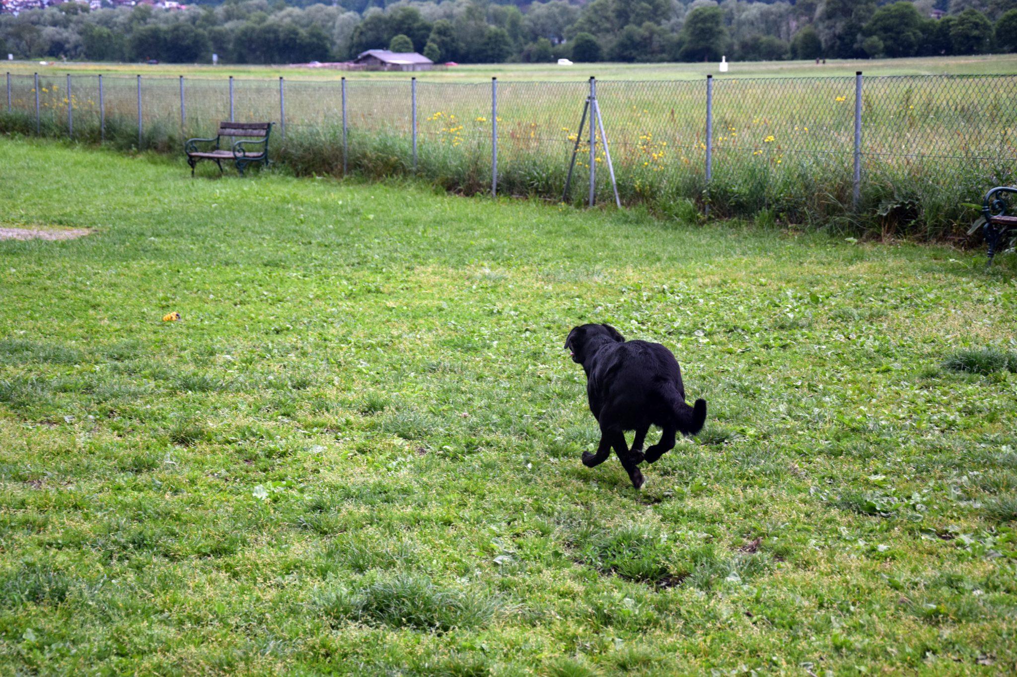 Laufen auf der Hundewiese Schwaz