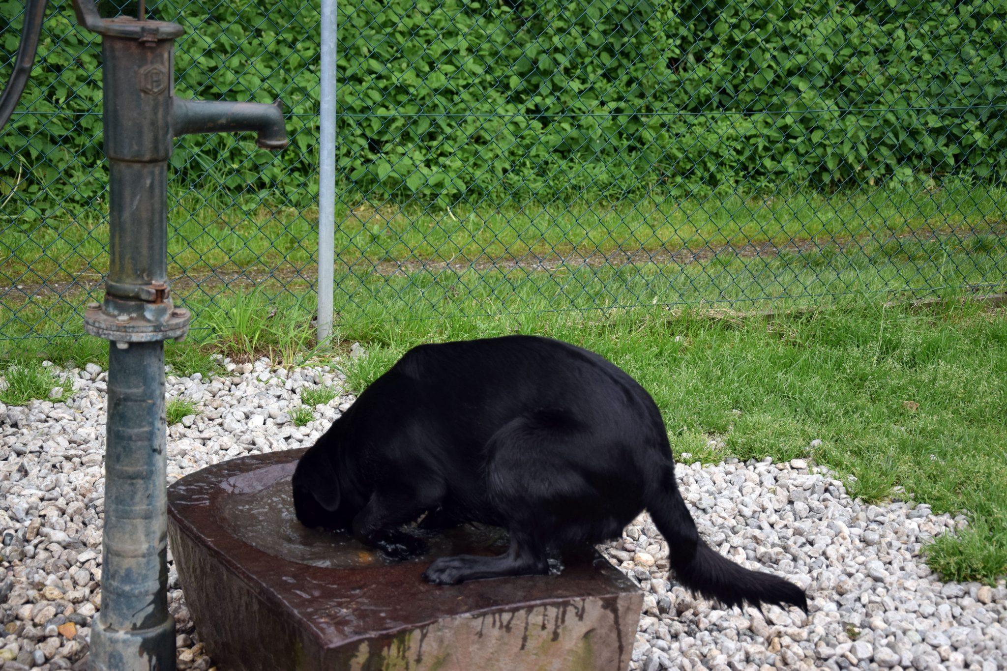 Abkühlung auf der Hundewiese Schwaz