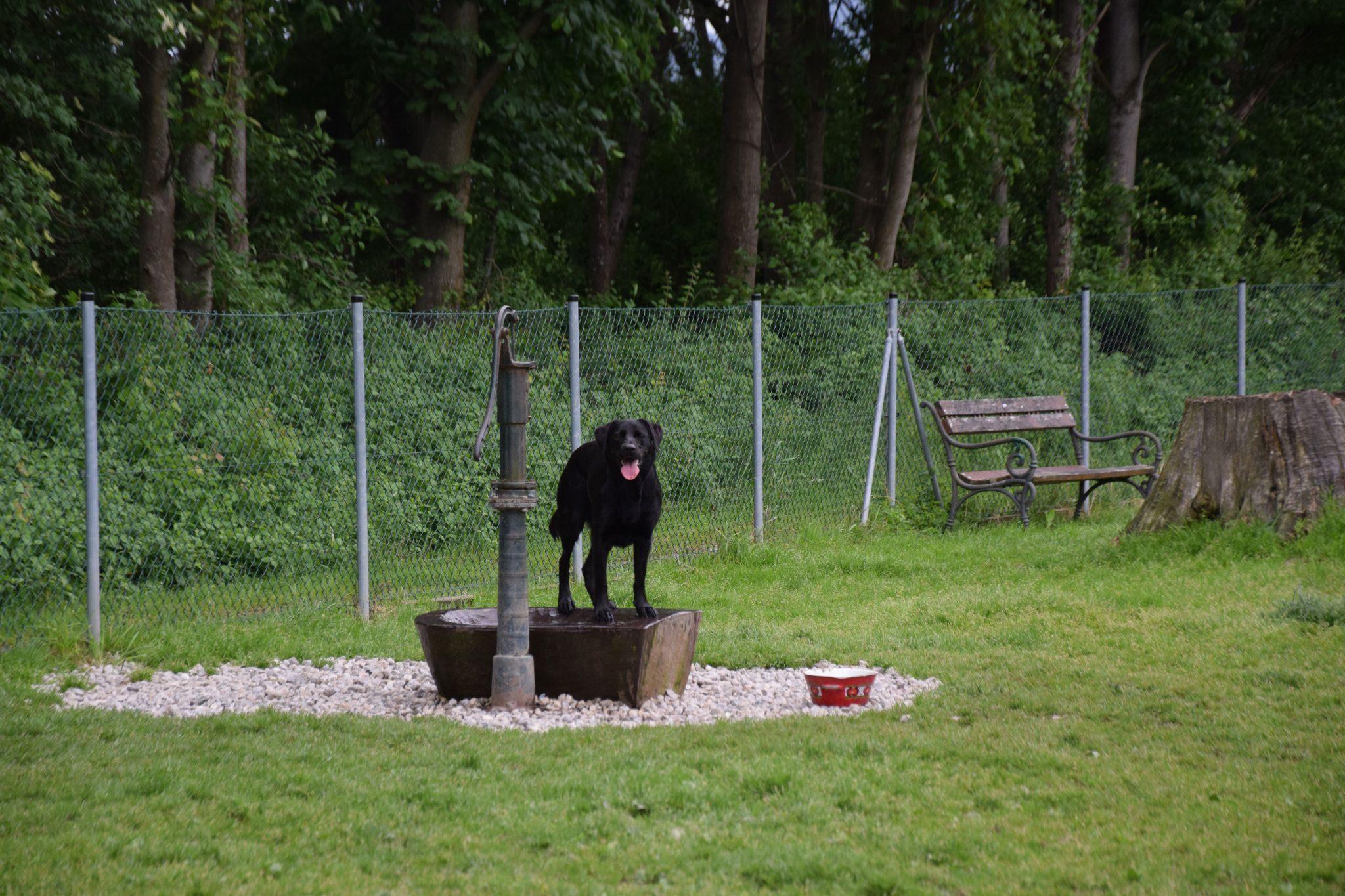 Brunnen auf der Hundewiese Schwaz
