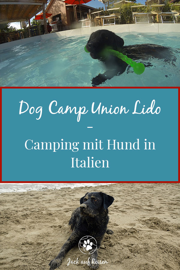 Dog Camp Union Lido