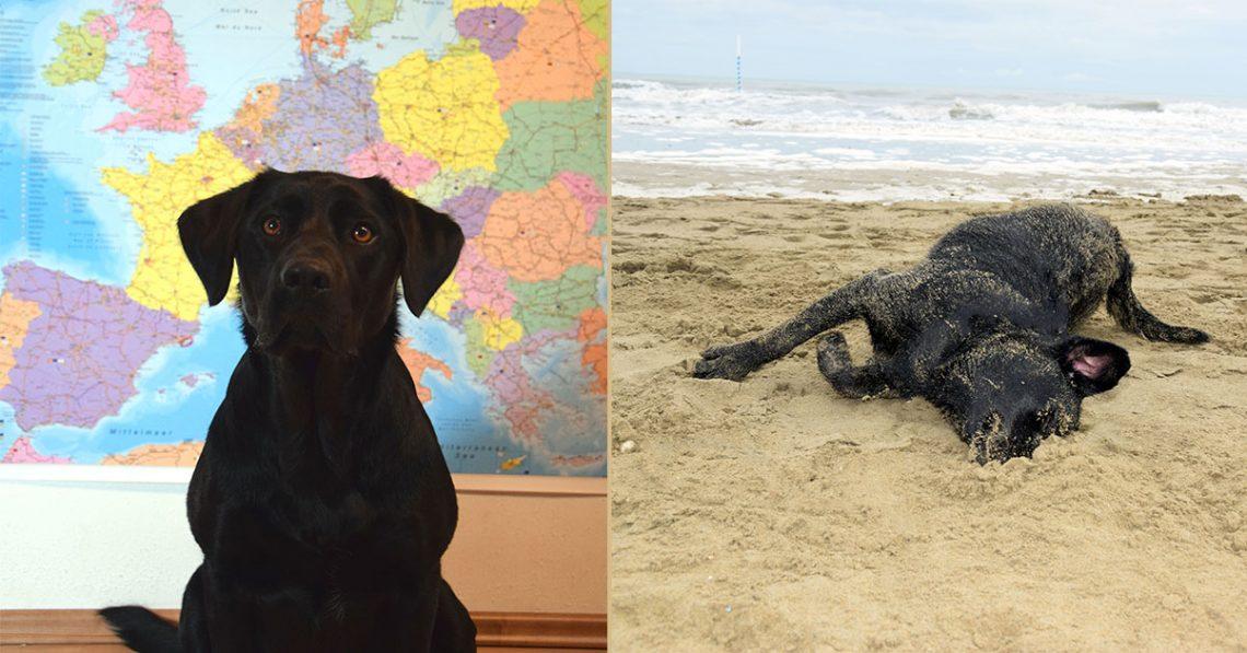 Europareise mit Hund und Campingbus Vorbereitungen