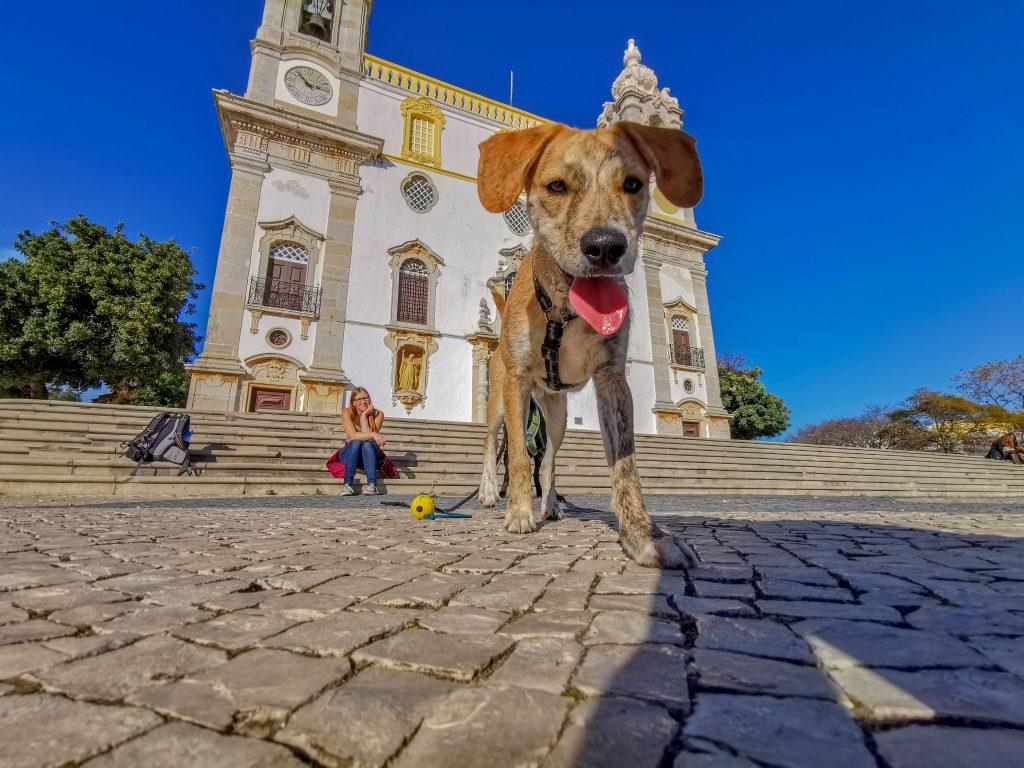 Faro mit Hund