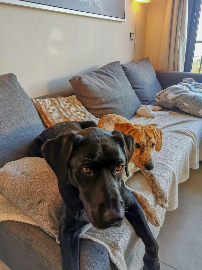 Ferienwohnung mit Hund in Marbella