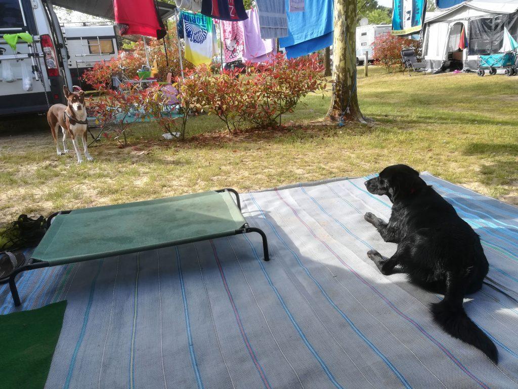 Fido Stellplatz Dog Camp Union Lido