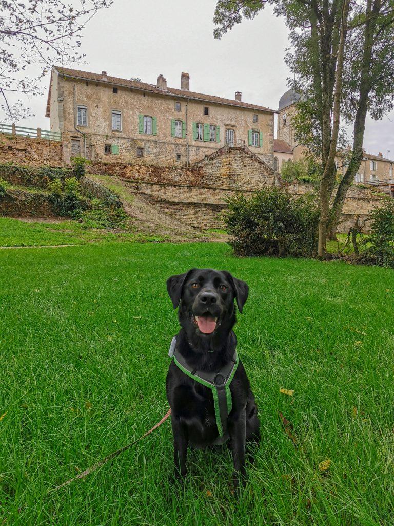 Frankreich mit Hund