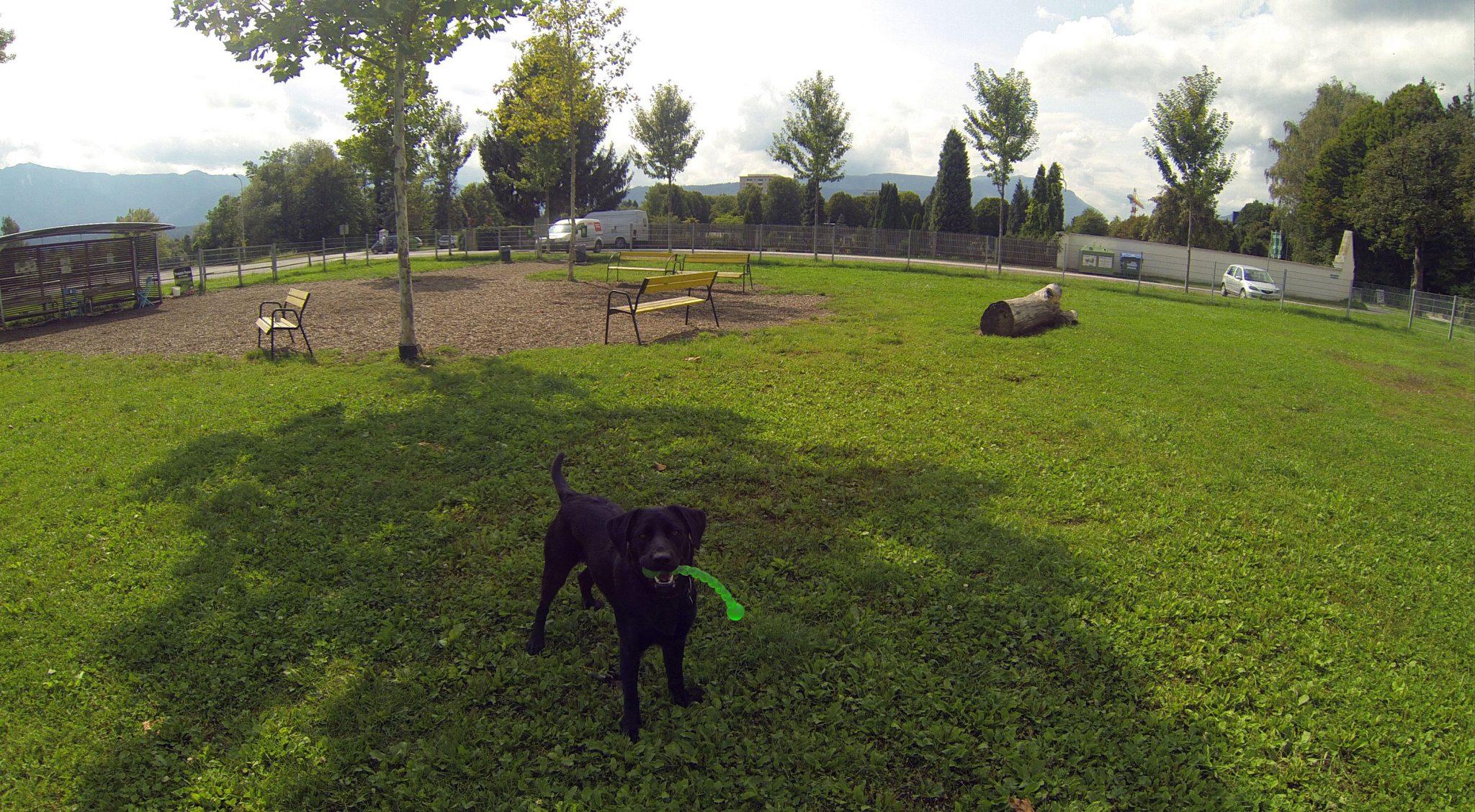 Spielen auf der Hundewiese Villach