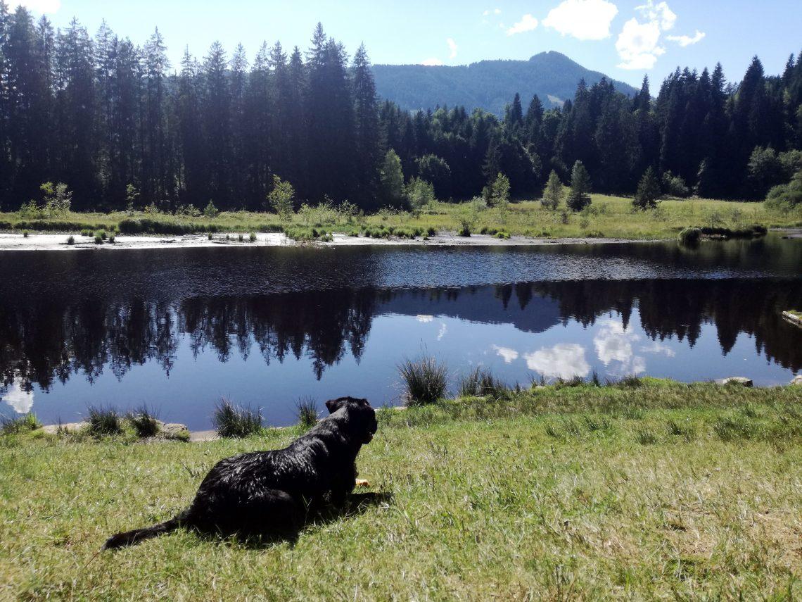 Baden mit Hund am Gieringer Weiher