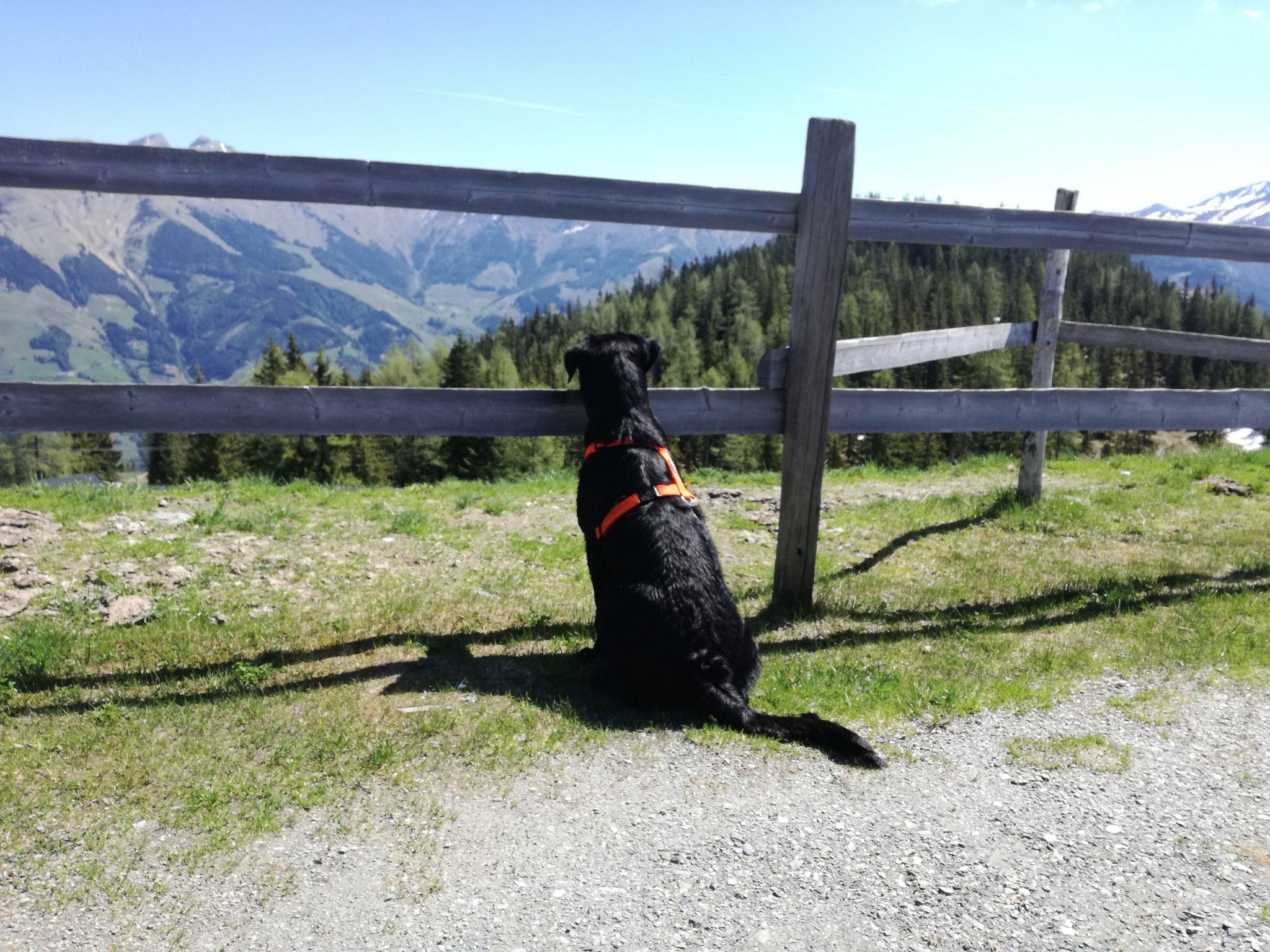 Hund Ausblick Speichersee Rauris