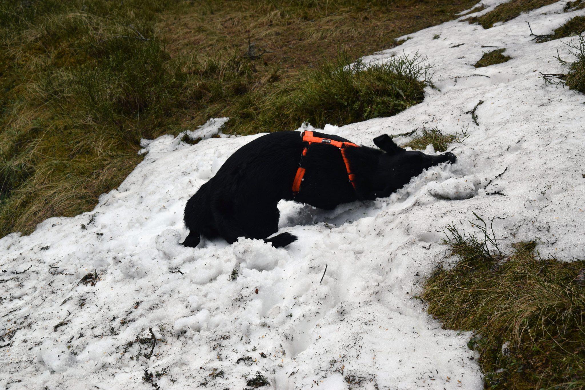 Hund Schnee Sommer