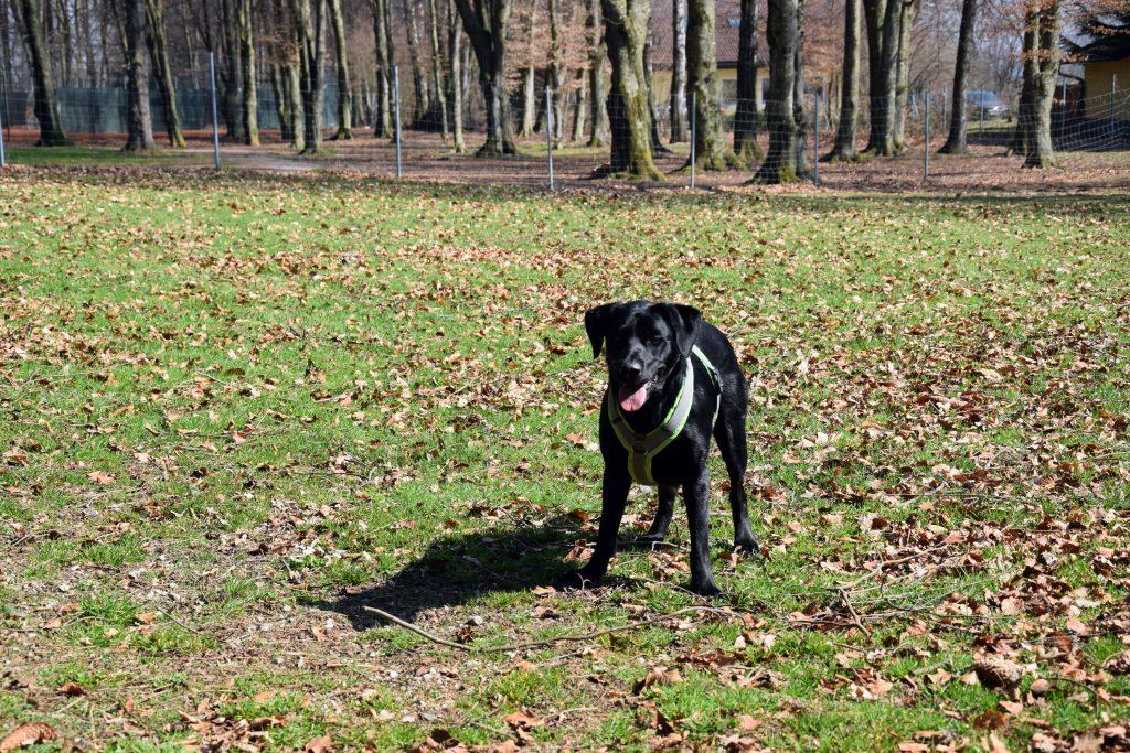 Hund Waging am See Hundespielplatz