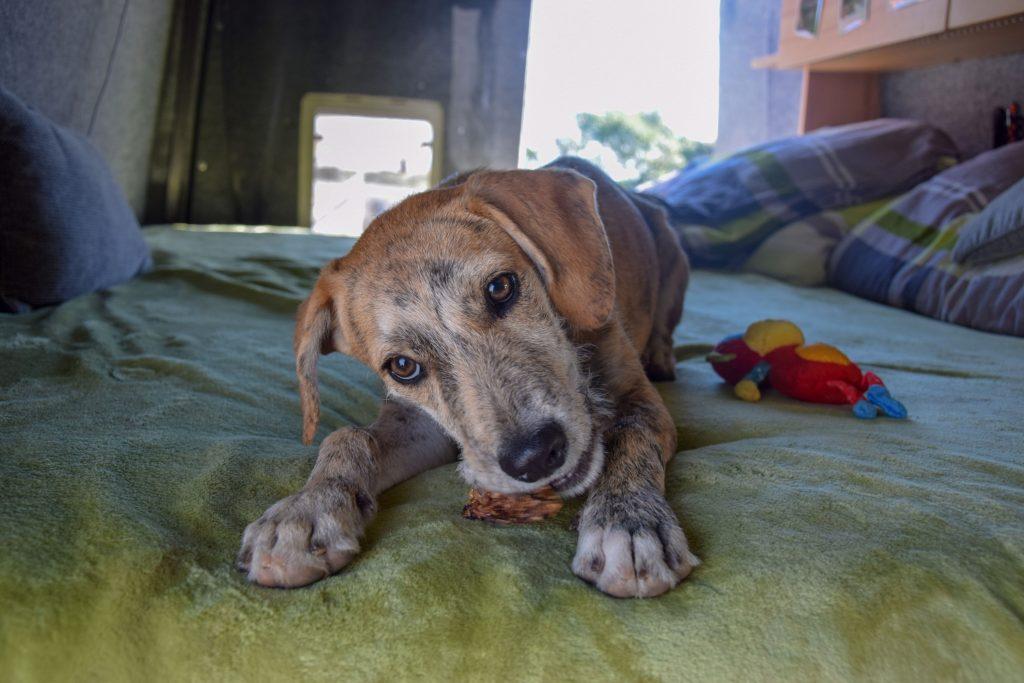 Hund adoptieren in Spanien