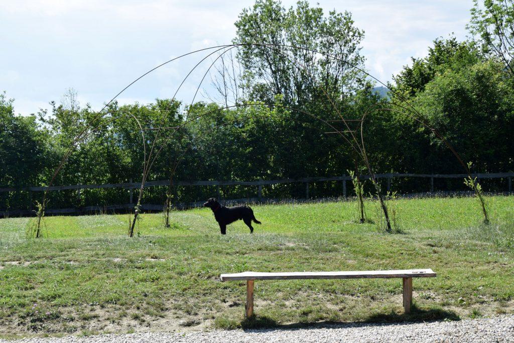 Hund am Hundespielplatz Camping Rosental Roz