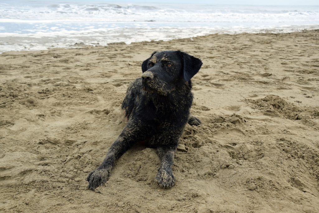 Hund am Hundestrand Union Lido