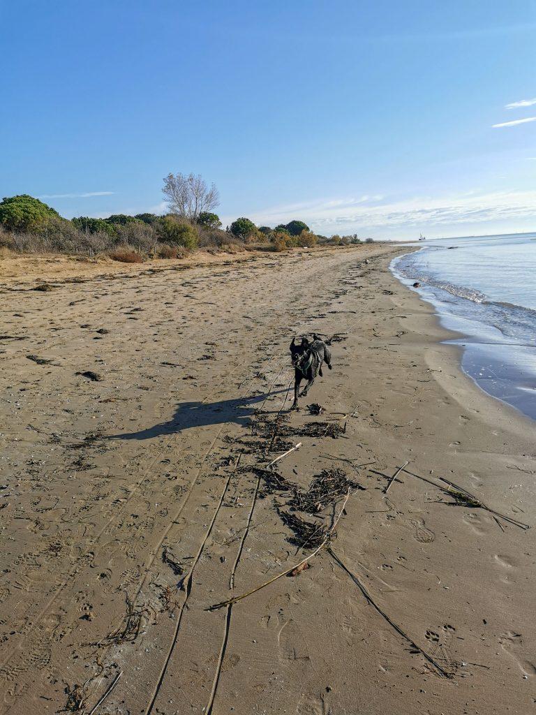 Hund am Strand in Italien