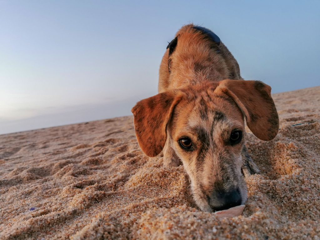 Hund am Strand in Portugal