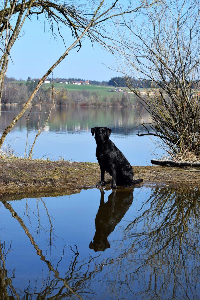 Hund am Wasser Waging am See