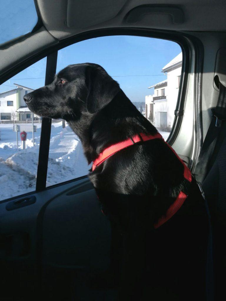 Hund auf Beifahrersitz