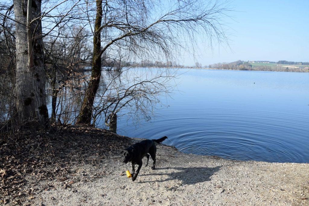 Hund auf Hundebadeplatz Waging am See