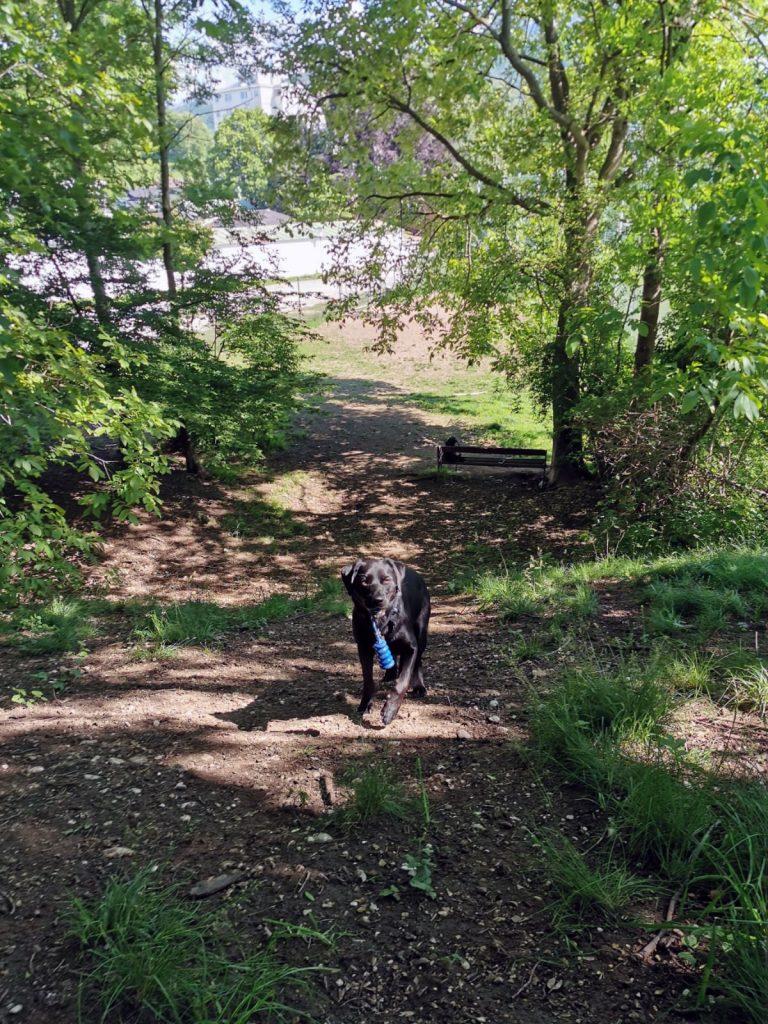 Hund auf Hundewiese Gmunden