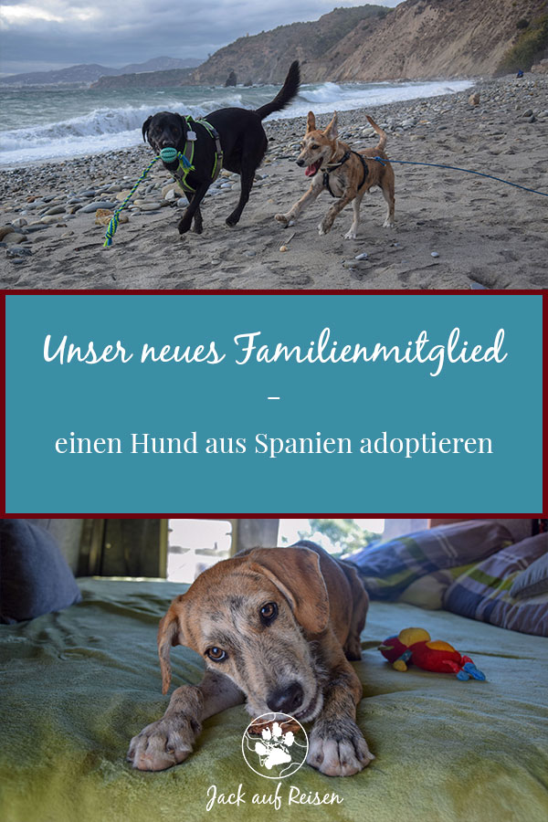 Hund aus Spanien adoptieren Pin