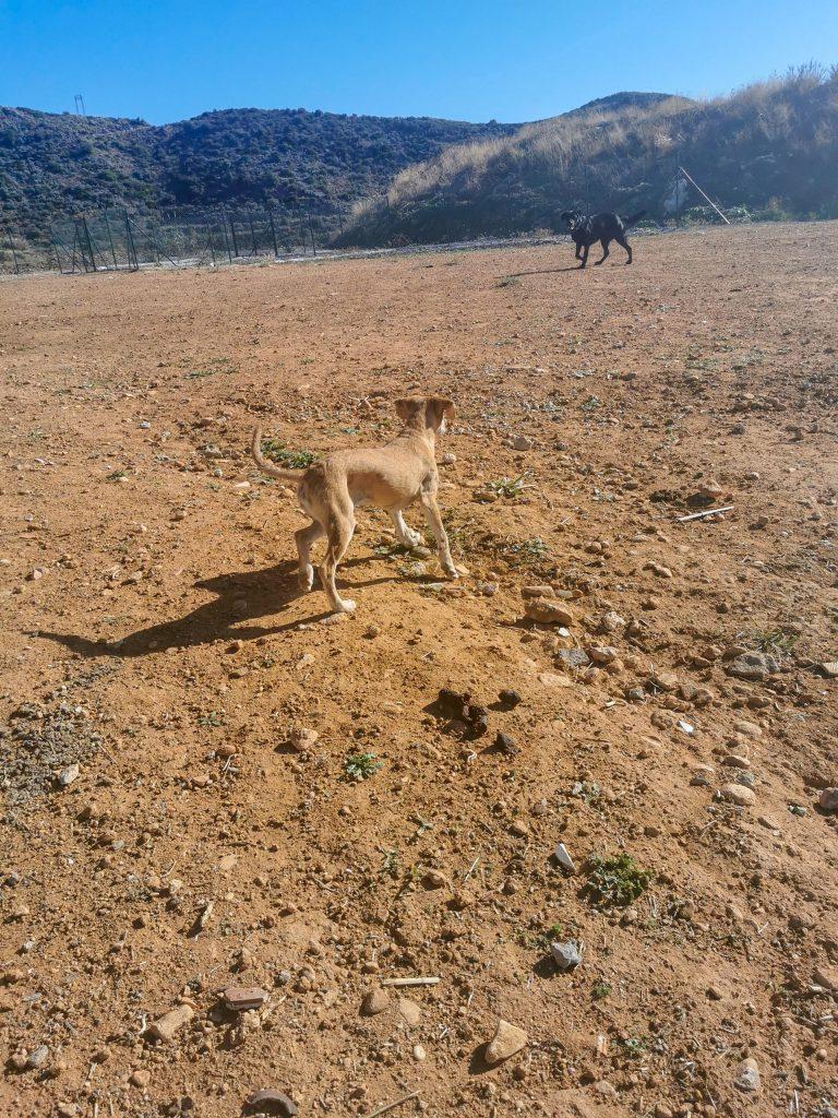 Hund aus dem Tierheim in Spanien adoptieren
