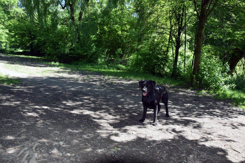 Hund im Hans-Donnenberg-Park Salzburg