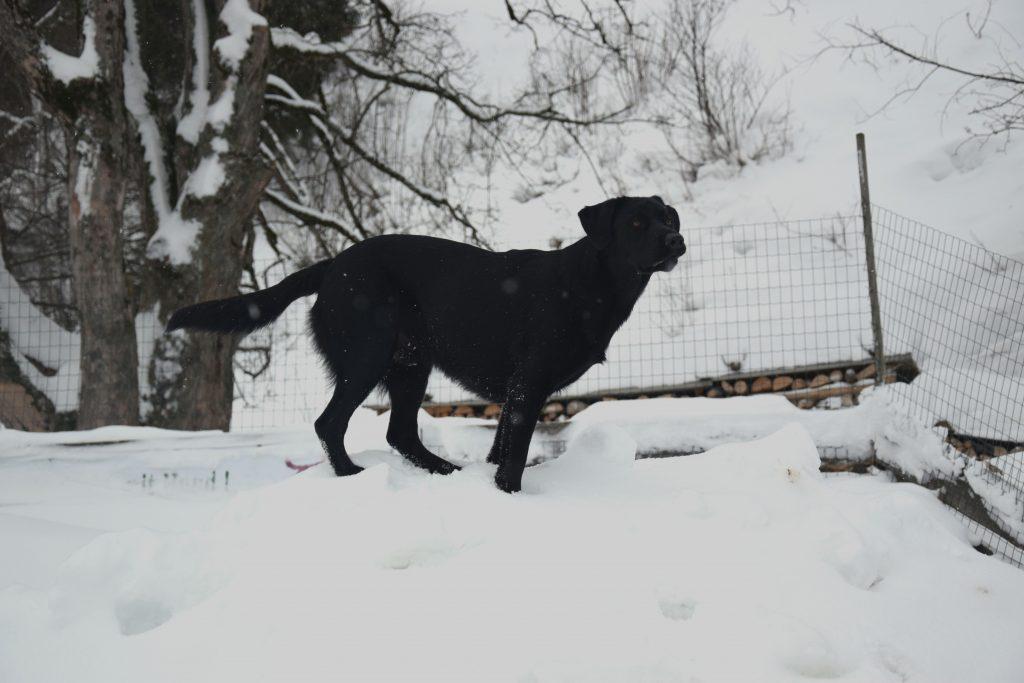 Hund im Schnee am Hundespielplatz