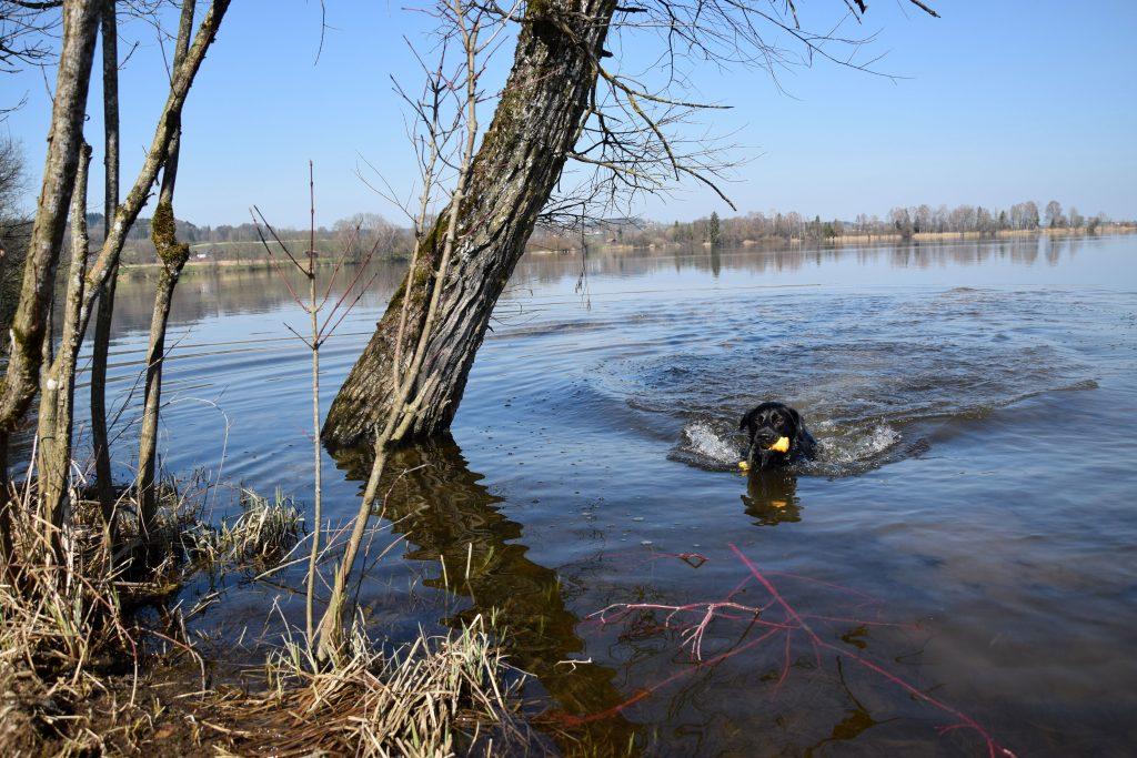 Hund im Waginger See