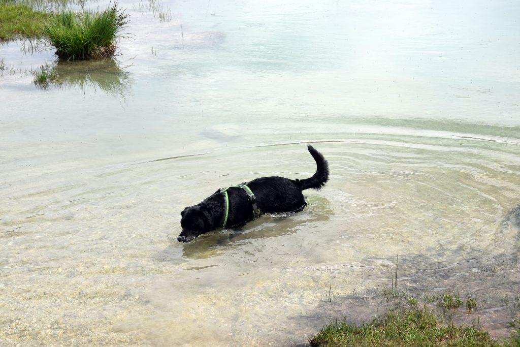 Hund im Wasser Salzburg